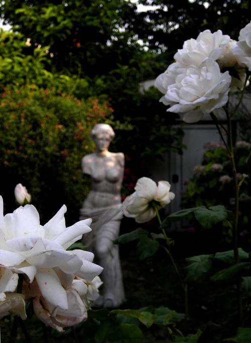 suburban roses